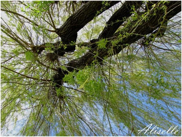 Parc de Beauregard: arbres et ruine...