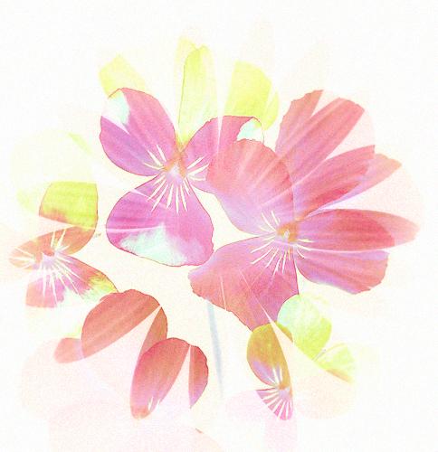 [cerise+] Flowers - Signature complète Hx0g04ismOOPH_u3LPs4F0F6mEo