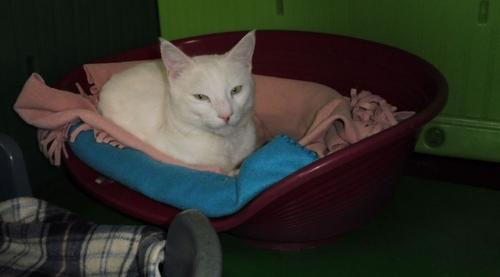 Un chat disparu en Corse retrouvé 3 mois plus tard en Bretagne
