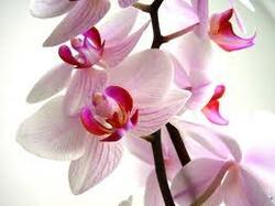 histoire fleures (2eme article)--'