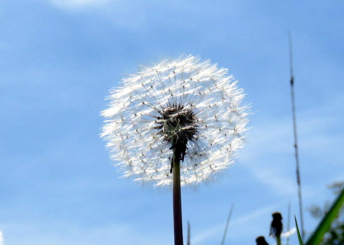 fleur fanées