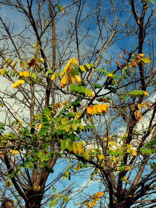 Les arbres en automne (3)