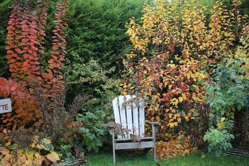 Le jardin en mode automne - hiver