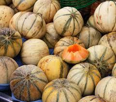 Le Melon : un fruit gorgé d'eau et de soleil
