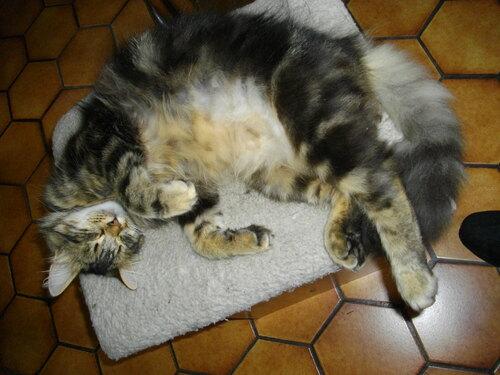 C'est dur la vie de chat non???