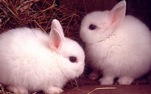 Mes 10 images préféré de lapin
