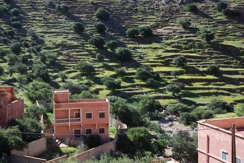 Maisons modernes et cultures en terrasse