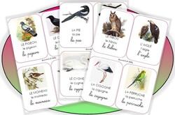 Imagiers _ les oiseaux
