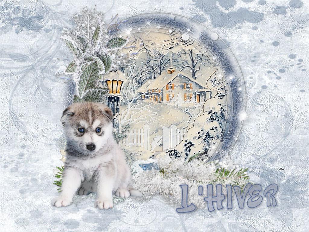 Fond d 39 cran hiver mcreations for Fond ecran hiver animaux
