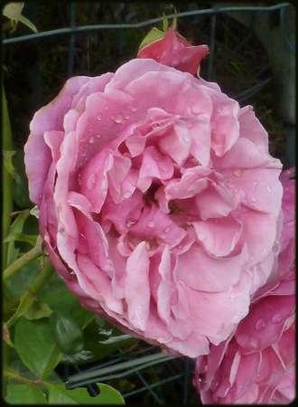 Perles de pluie du 8 juillet 2012