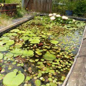 santonine---juillet-2014---bassin-long--800x800-.jpg