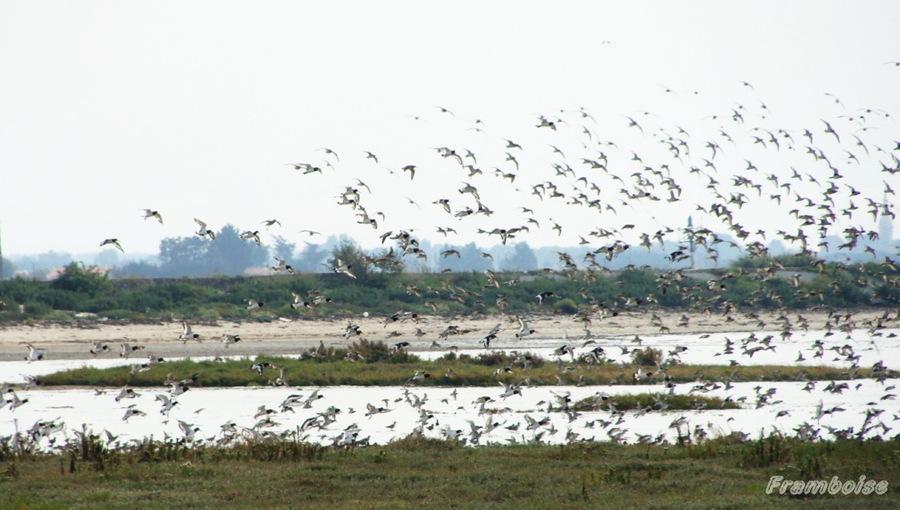 Sortie oiseaux avec Nature à tire-d'ailes de la Bernerie