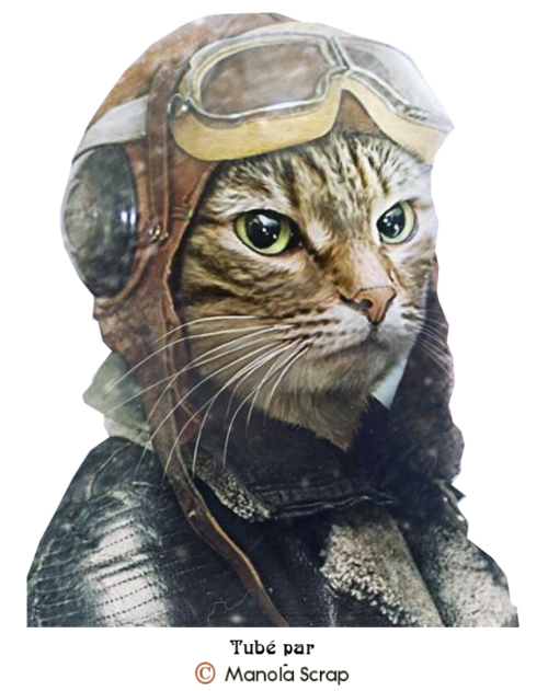 les chats Steampunk