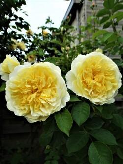 En jaune et blanc!