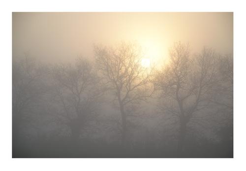 mardi -   Montaigu, le soleil fait son apparition