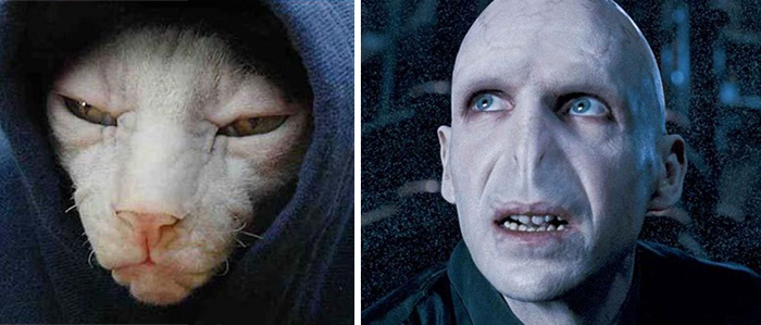 cat-looks-like-other-thing-lookalikes-celebrities-41__700
