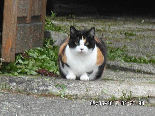 chat-pichon-et-fleurs-5-mai-001.JPG