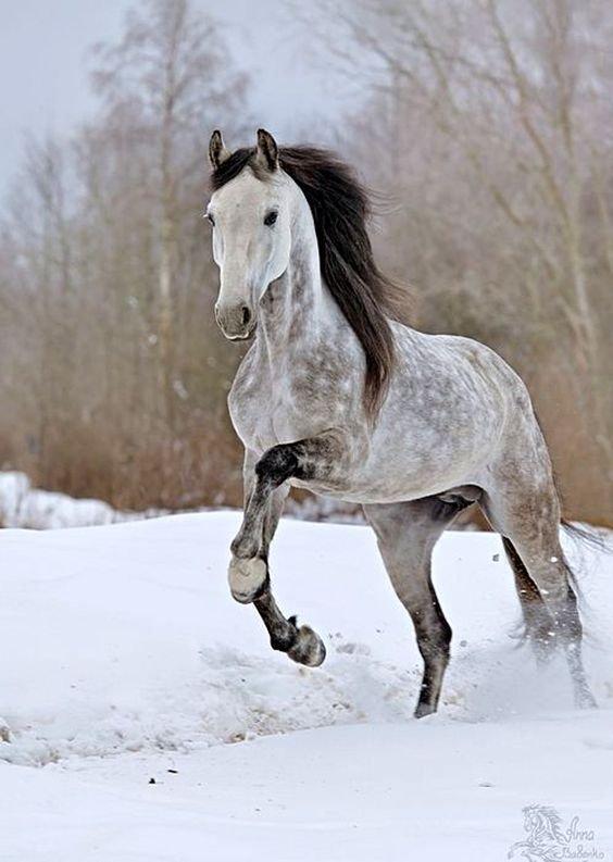 il joue dans la neige