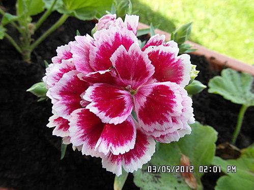 jardinieres-011.JPG