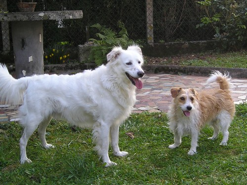 Titi et Grosminet côté chiens
