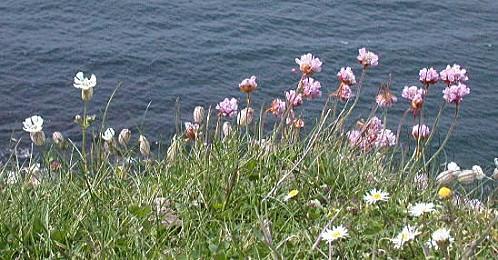 060525-clifftop-flowers