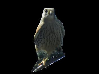 Tubes Oiseaux divers