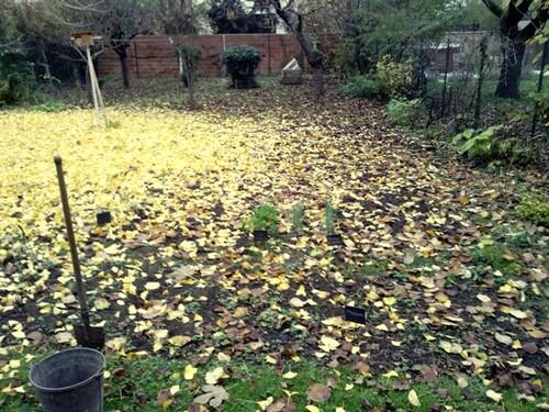30 novembre : le tapis jaune