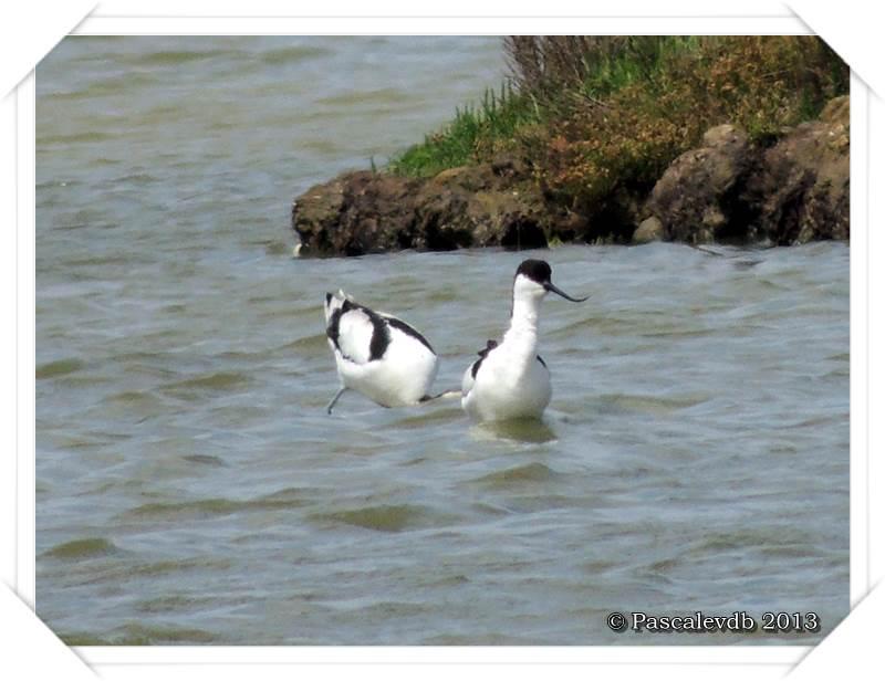 Symphonie printanière à la réserve ornithologique du Teich - 11/20