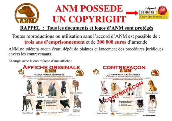 copyright anm 2014