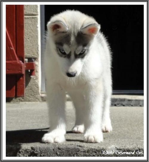 Kiska (2,5 mois)