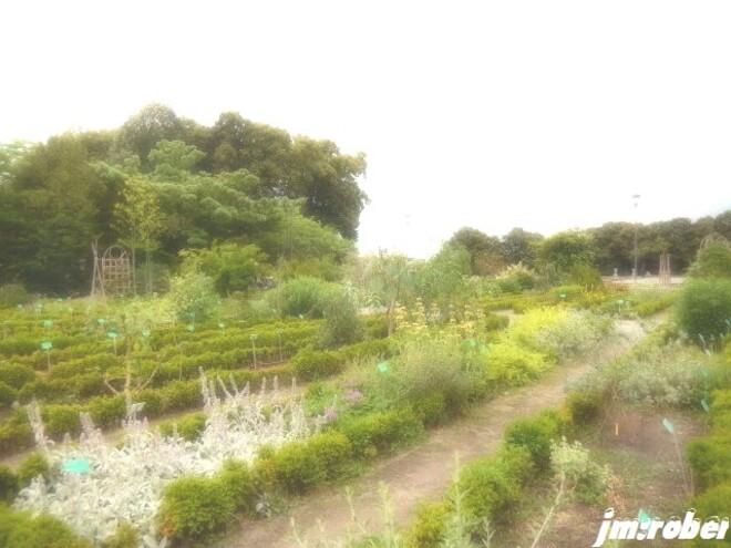 D'un weekend à l'autre , une visite autour des jardins de la capitale limougeaude (1/2)