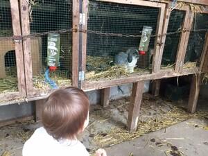 Un dimanche à la ferme d'Uccle avec bébé