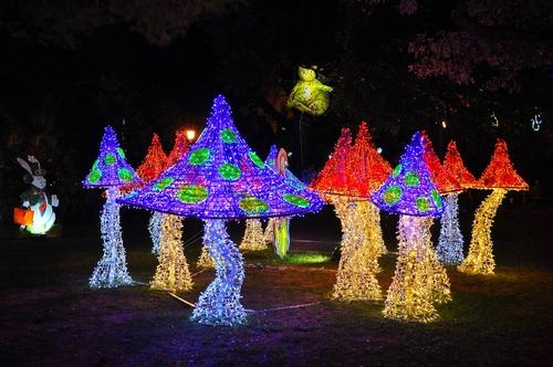 Le jardin de lumière