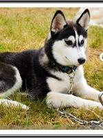 Mishka (5,5 mois)
