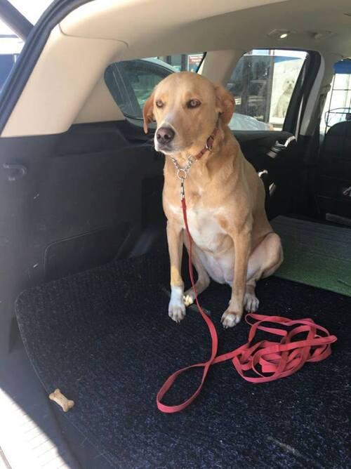 (-*♥*-) Lana, le chien le plus triste du monde, a trouvé une nouvelle famille !   (-*♥*-)