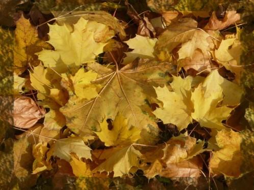 automne-feuilles.jpg