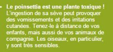 LES  PLANTES D'INTERIEURES  APRES LES FETES