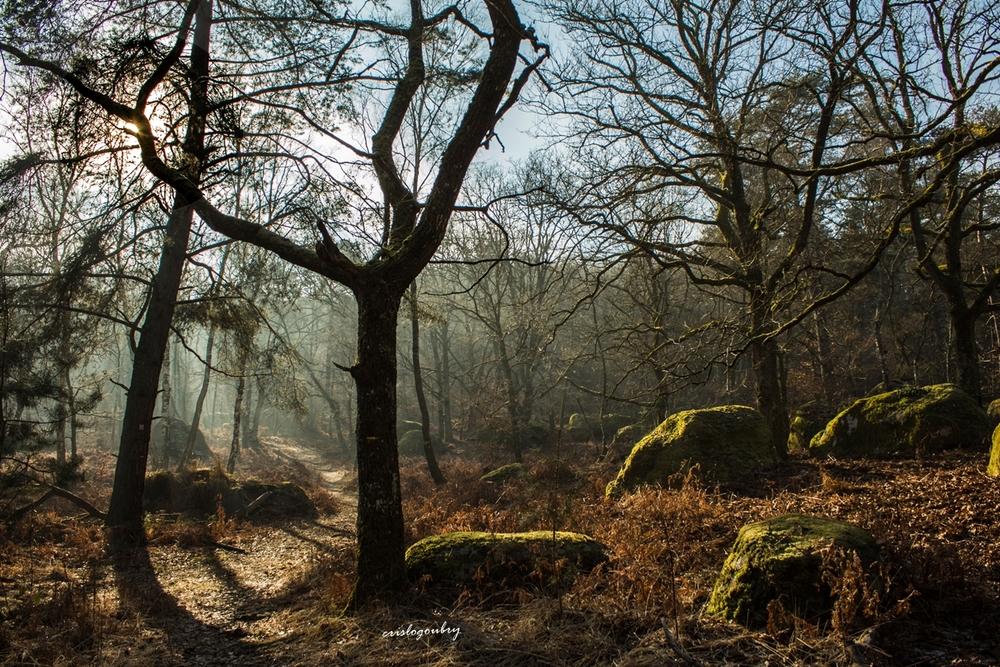 Fouillis forestier
