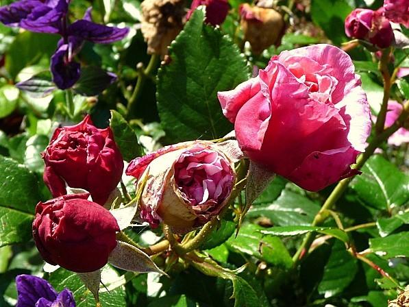 jardin-des-plantes-034.JPG