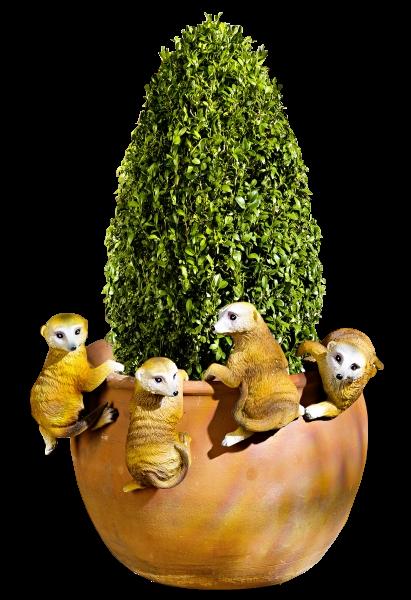 Tube suricates
