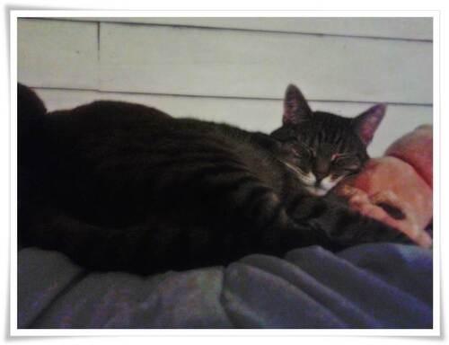Au revoir, mon chat adoré