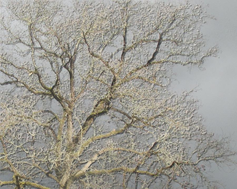 Photos persos retravaillées, arbres en hiver