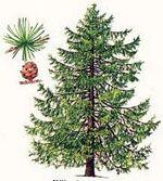 Forest'IFS : essences en forêt d'Ifs