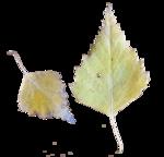 Chronique des jours d'automne - Chronicle of autumnal days