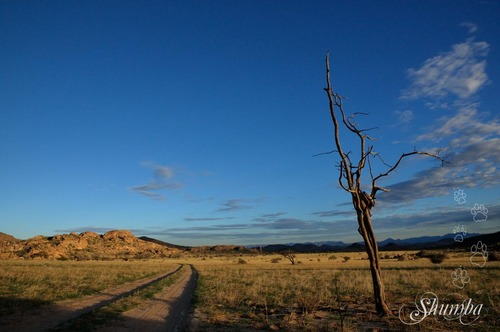 Wilsonfontein hunting farm