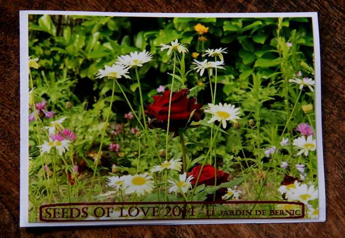 Seeds of Love - News