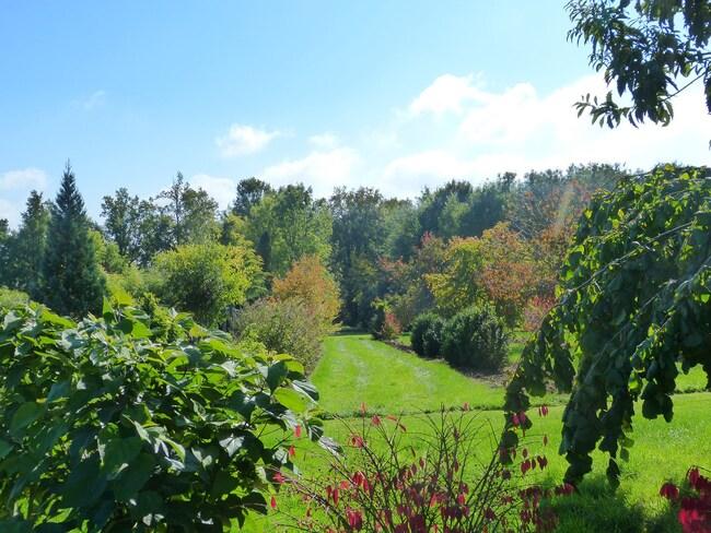 à la recherche des couleurs d'automne
