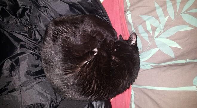 la convalescence du chat des baléares ....