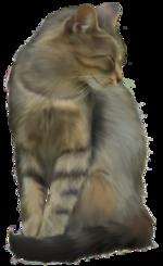 Tubes chats et chiens