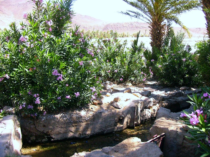 Flore Marocaine